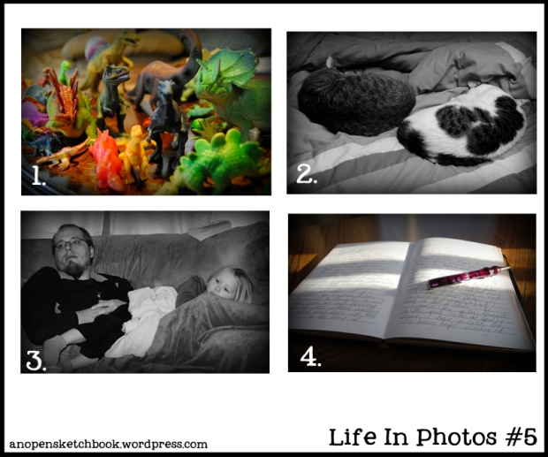 Life In Photos 5
