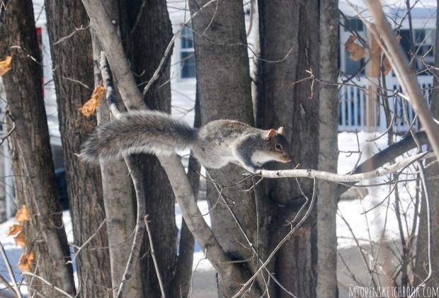 squirrelA